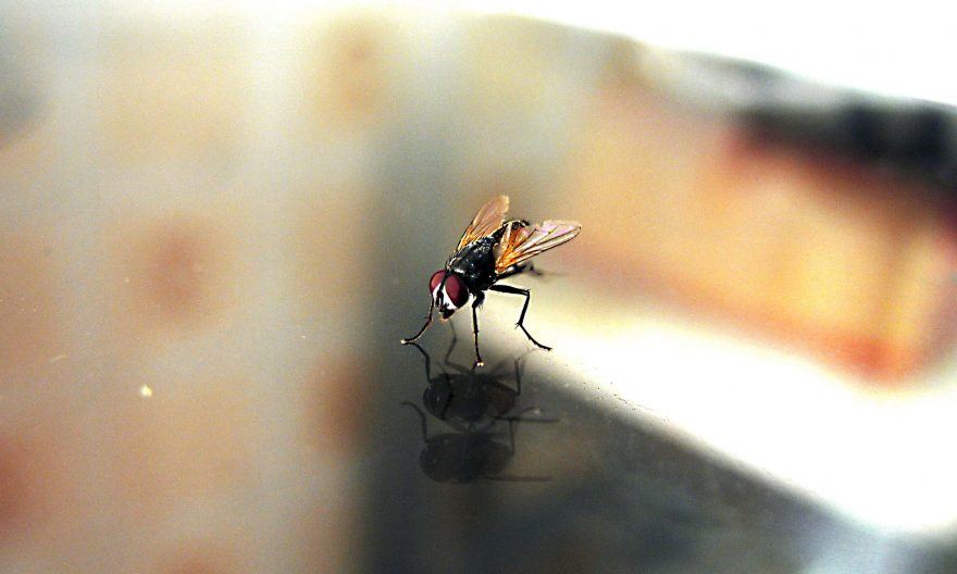 Lutter contre les mouches à la maison