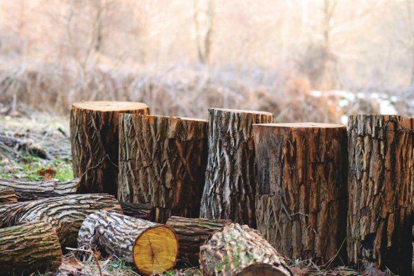 eliminer-souche-tronc-arbre-jardin